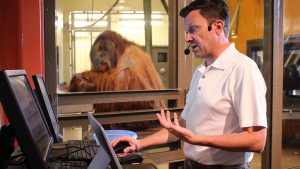Orang-utan typing on a computer asking what are you writing?